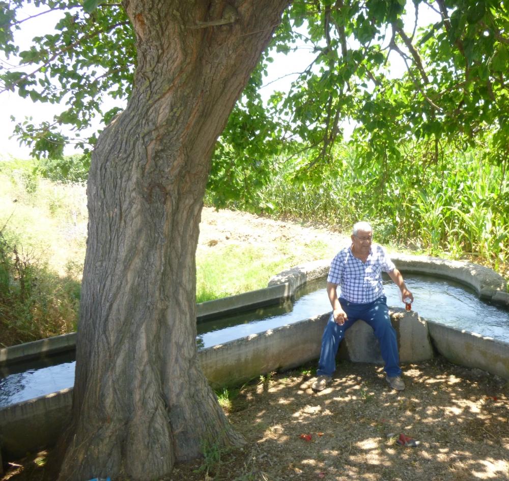 Seyhan kıyısında ağaç gölgesi 1