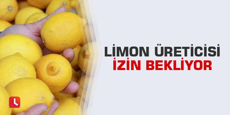 Limon üreticisi izin bekliyor