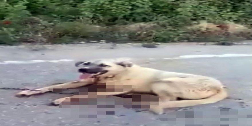 Köpeği cezalandırmak için aracın arkasına bağlayarak sürükledi