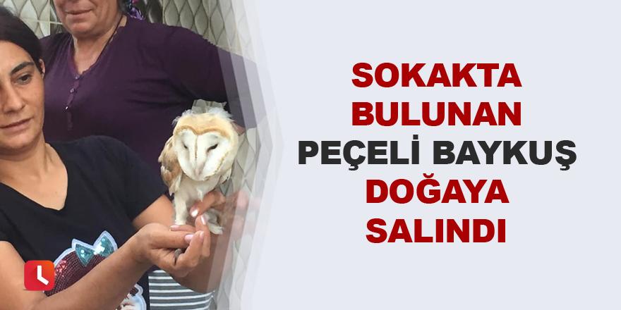Sokakta bulunan peçeli baykuş doğaya salındı