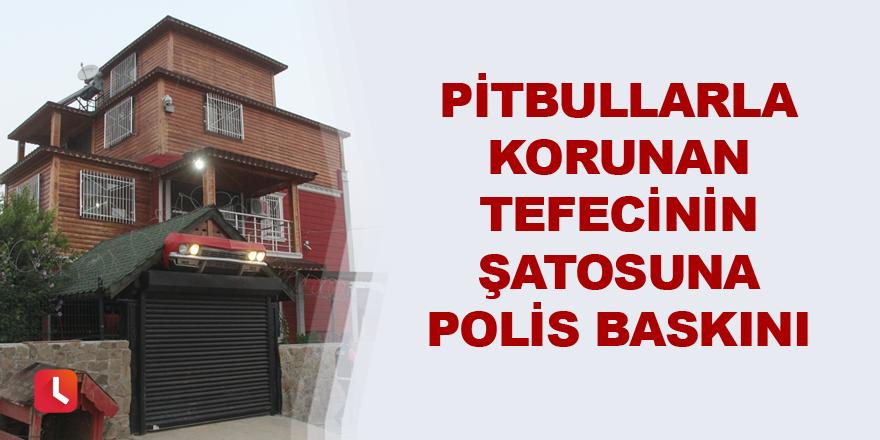 Pitbullarla korunan tefecinin şatosuna polis baskını
