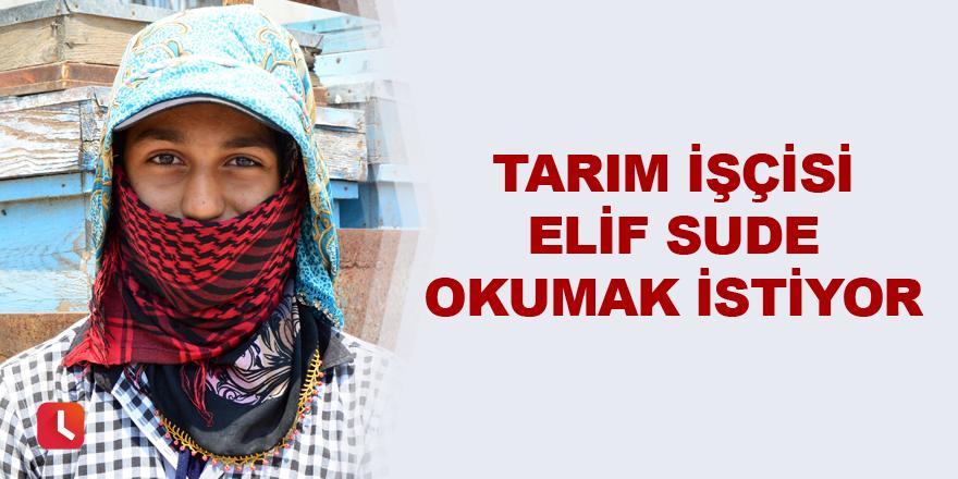 Tarım işçisi Elif Sude okumak istiyor
