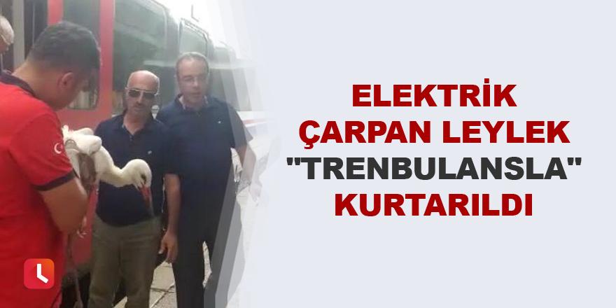 """Elektrik çarpan leylek """"trenbulansla"""" kurtarıldı"""