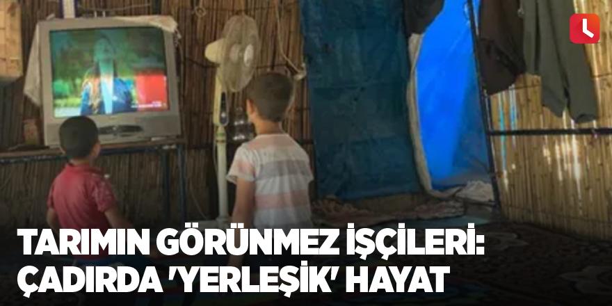 Tarımın görünmez işçileri: Çadırda 'yerleşik' hayat