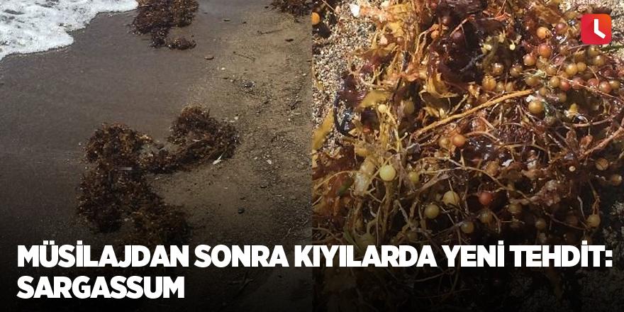 Müsilajdan sonra kıyılarda yeni tehdit: Sargassum