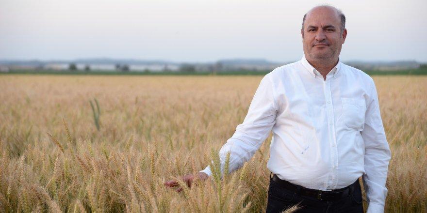 Cahit İncefikir: Buğday ekim alanı arttırılmalı