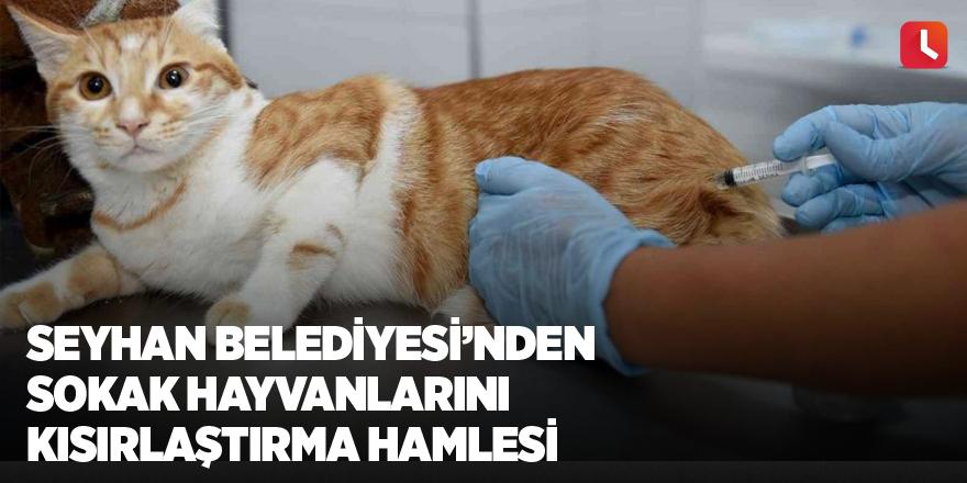 Seyhan Belediyesi'nden sokak hayvanlarını kısırlaştırma hamlesi