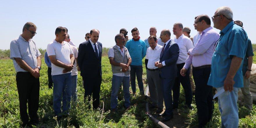 Şehrimiz yılda 1 milyon ton karpuz üretiyor