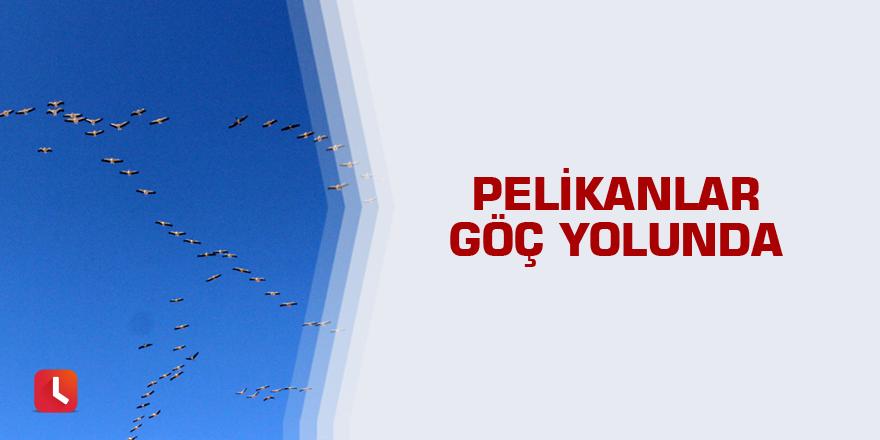 Pelikanlar göç yolunda