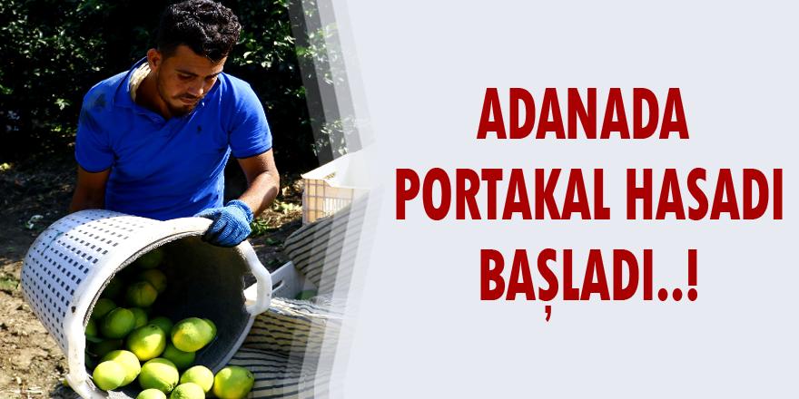 Adana'da portakal hasadı başladı..!