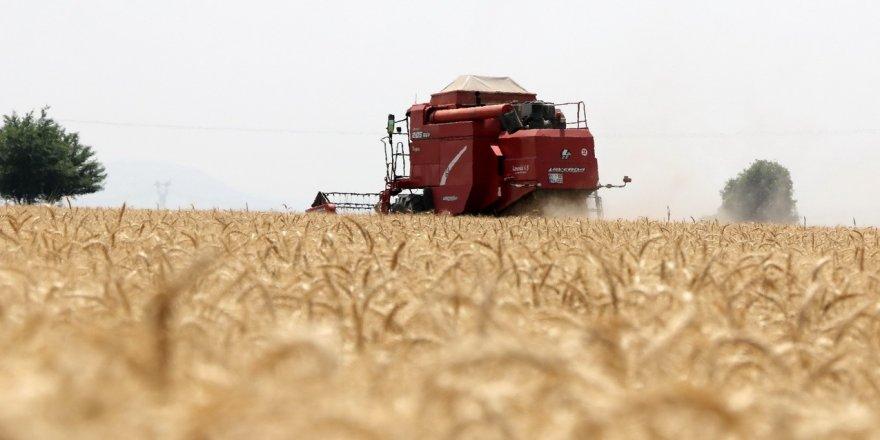 Kozan'da buğday hasadı başladı