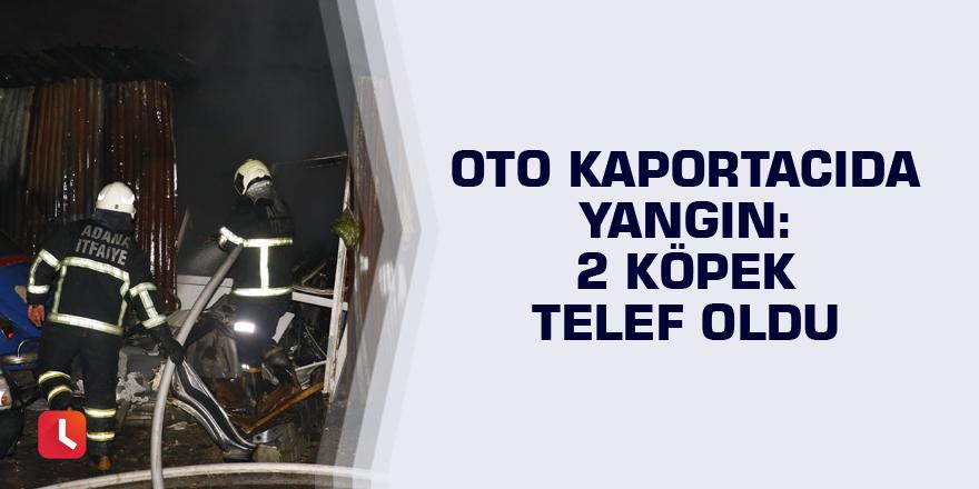 Oto kaportacıda yangın: 2 köpek telef oldu