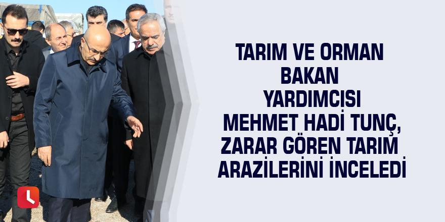 Tarım ve Orman Bakan Yardımcısı Mehmet Hadi Tunç, zarar gören tarım arazilerini inceledi