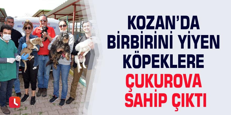 Kozan'da birbirini yiyen köpeklere Çukurova sahip çıktı