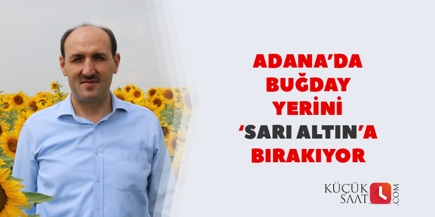 Adana'da buğday yerini 'sarı altın'a bırakıyor