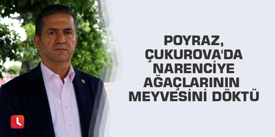 Poyraz, Çukurova'da narenciye ağaçlarının meyvesini döktü