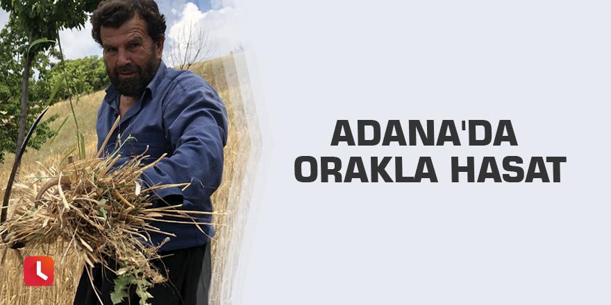 Adana'da orakla hasat