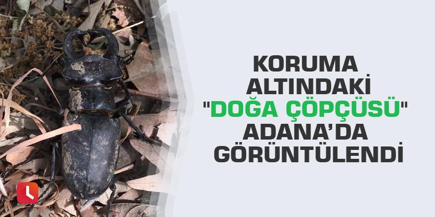 """Koruma altındaki """"doğa çöpçüsü"""" Adana'da görüntülendi"""