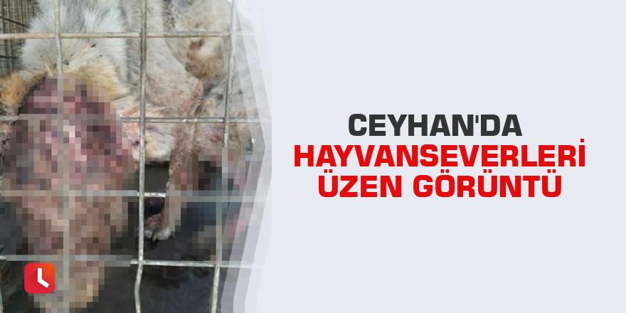 Ceyhan'da hayvanseverleri üzen görüntü