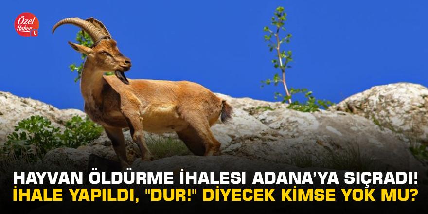 """Hayvan öldürme ihalesi Adana'ya sıçradı! İhale yapıldı, """"Dur!"""" diyecek kimse yok mu?"""