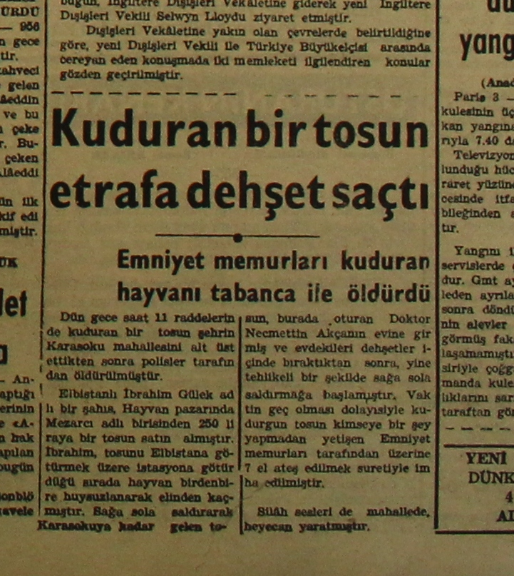 1956-01-04-kuduran-kurbanlik-tosun-ocak-1.JPG